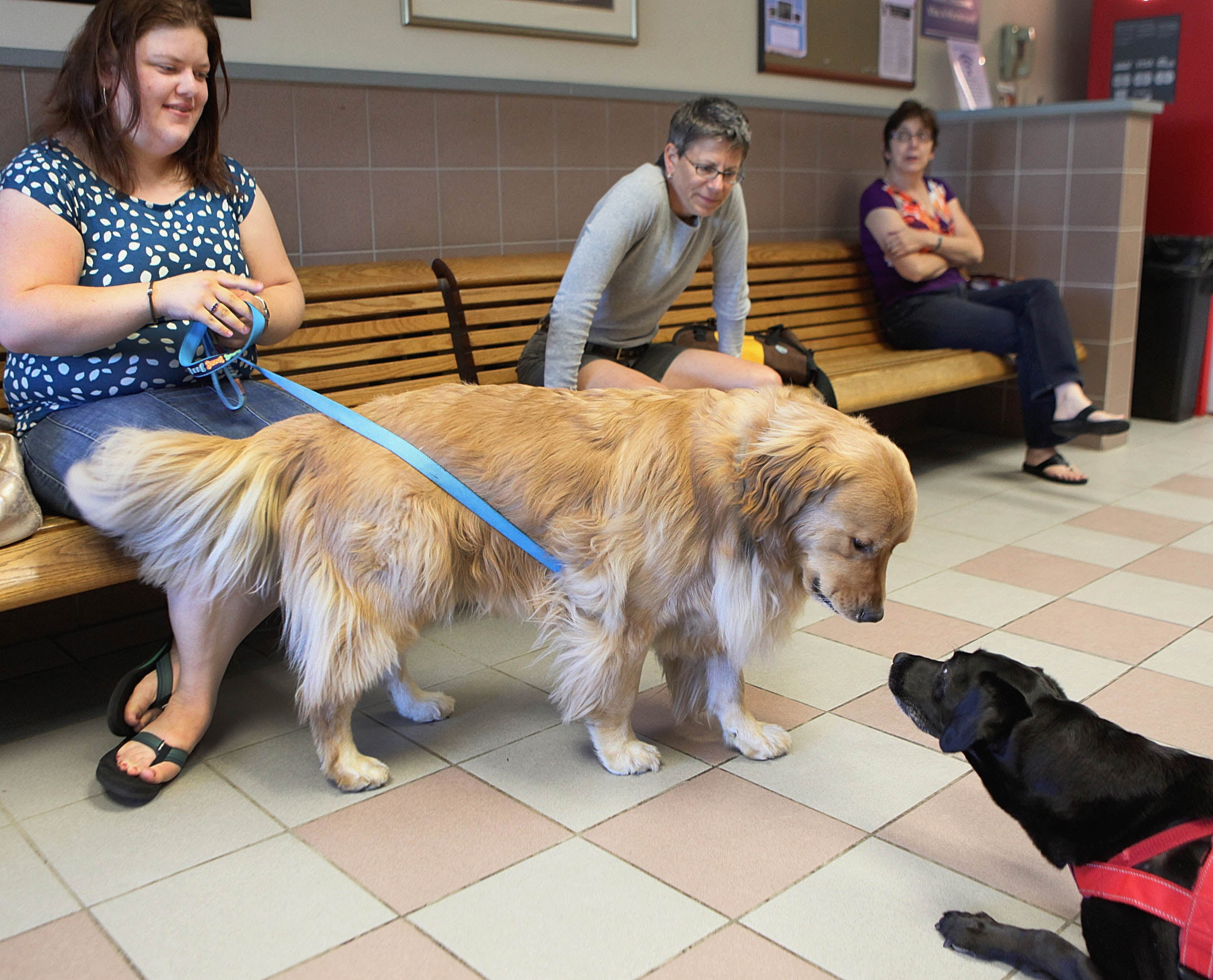 Lisa Baruzzi with golden retriever Richie at the Tufts obesity clinic for animals in North Grafton.