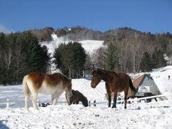 black_nh_horses.jpg
