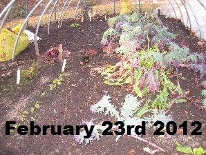 garden feb 23.jpg
