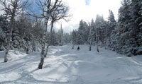 saddleback-trees-skier.jpg