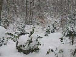 December Snow 2008 (3).jpg