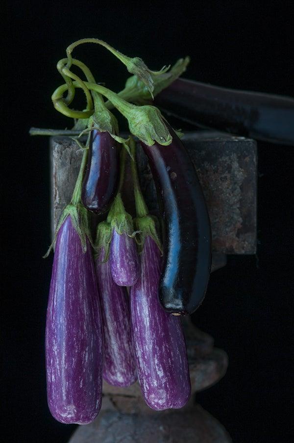 Karlin_Tender Eggplants.jpg