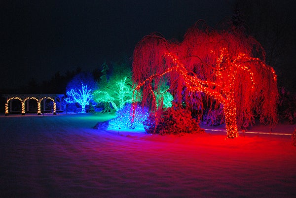 Lawn Garden lights at Holly Days by Thaddeus Thompsonblog.jpg