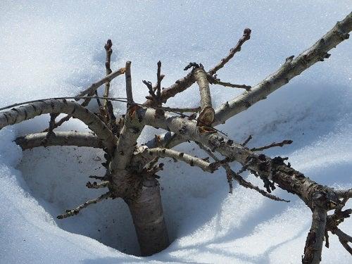 broken winter damage.jpg