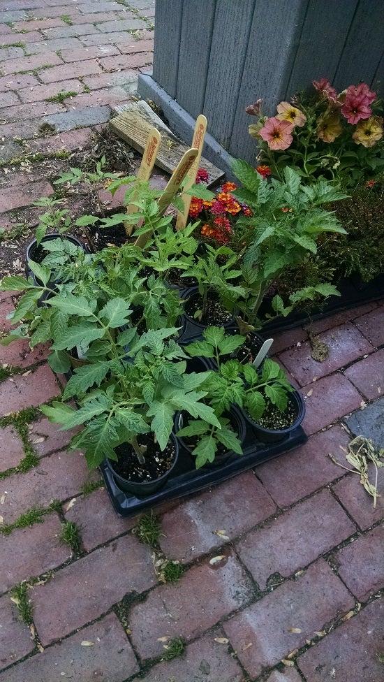 plants for garden.jpg