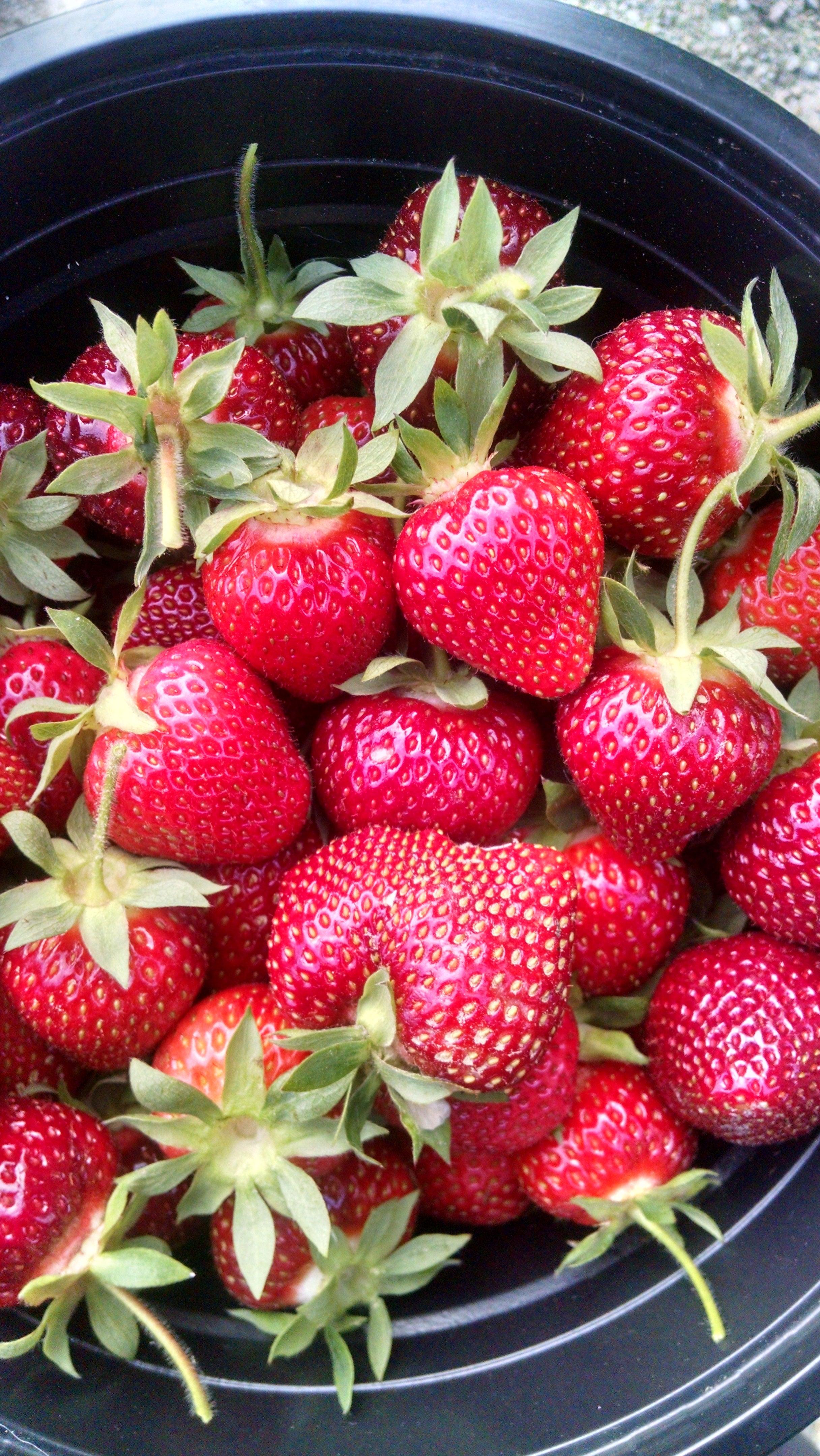 berries may 2015.jpg