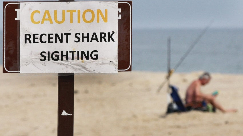 Us News Car Rankings >> A brief history of shark attacks in Massachusetts | Boston.com