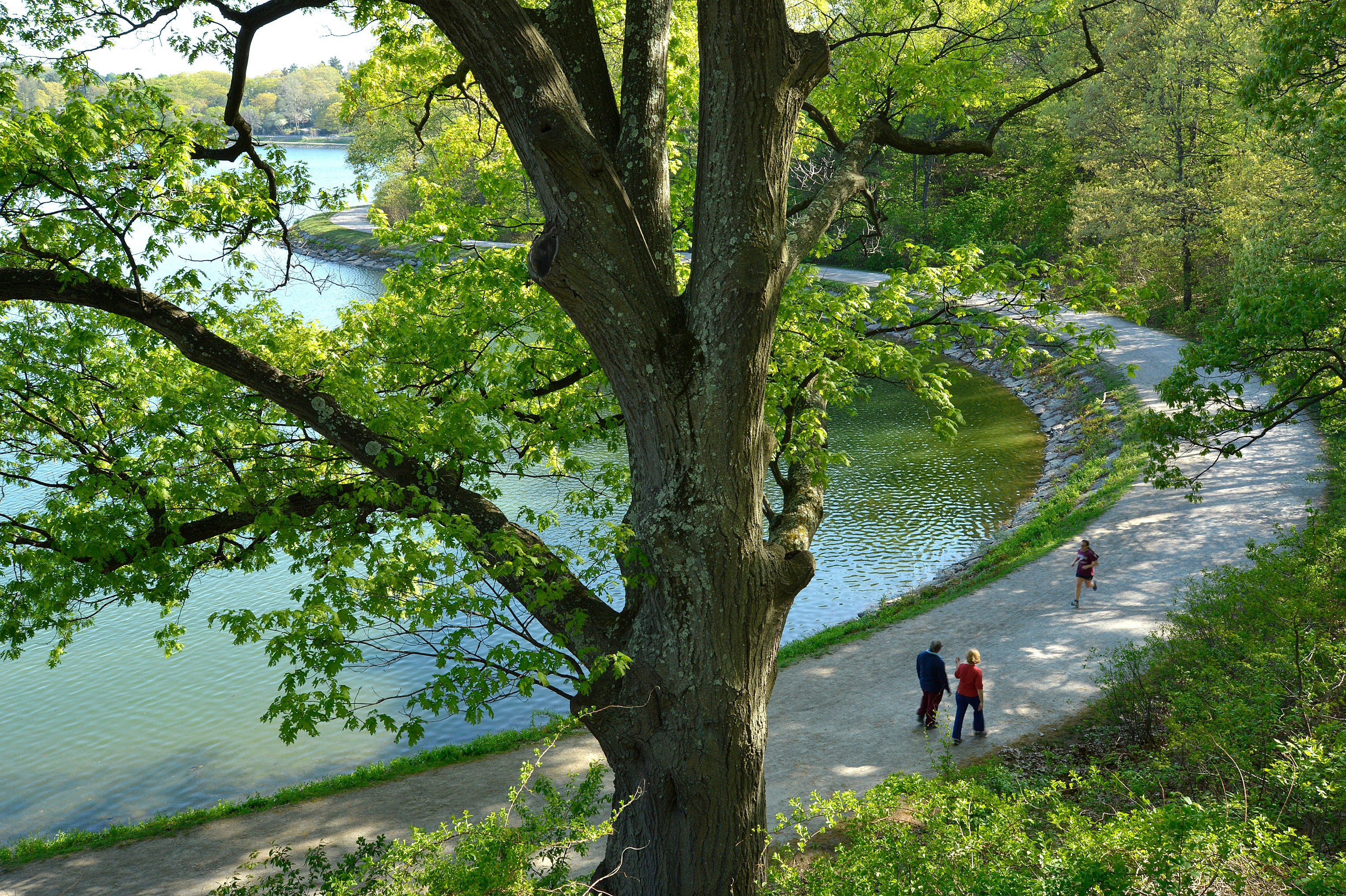 The Chestnut Hill Reservoir