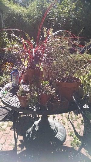 plants insdie.jpg