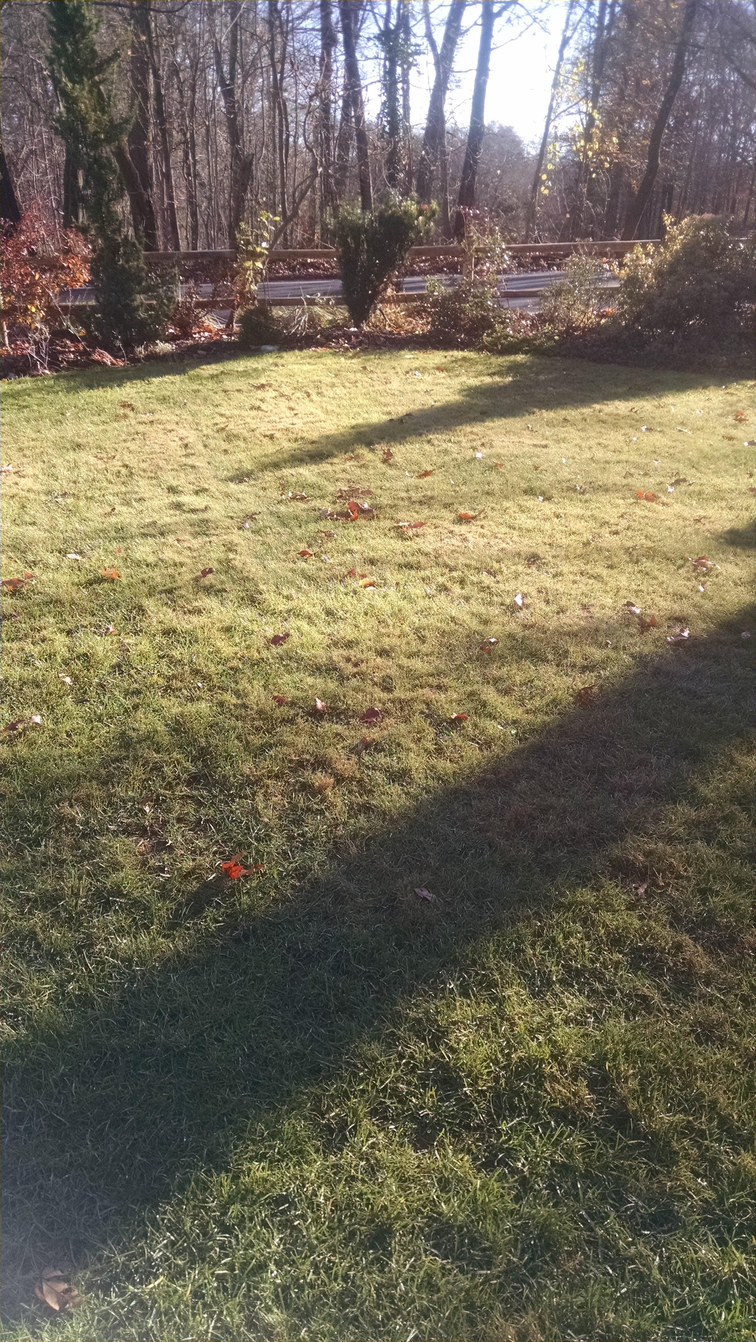 lawn in fall.jpg