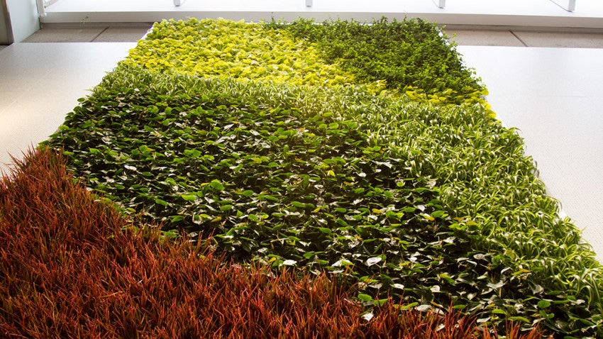 The Yawkey exhibit features a living green wall.