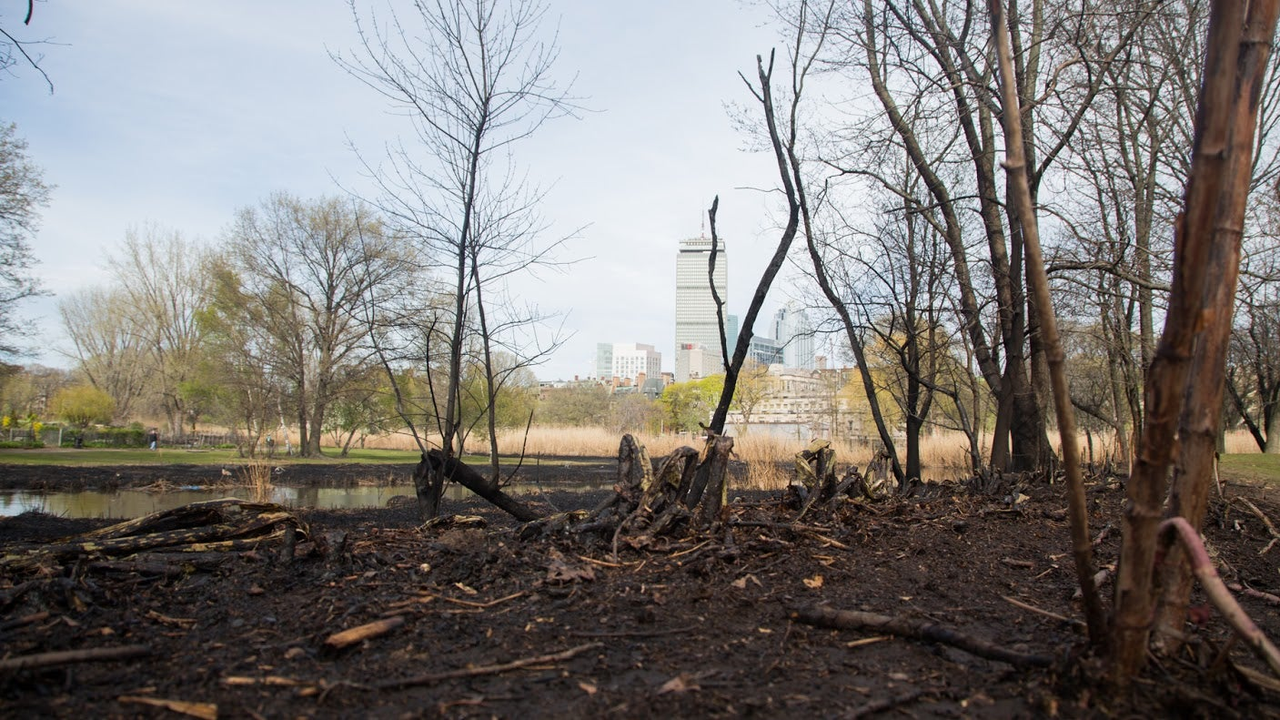 The Prudential Building is pictured in the background following a brush fire April 28 in the Fenway neighborhood.