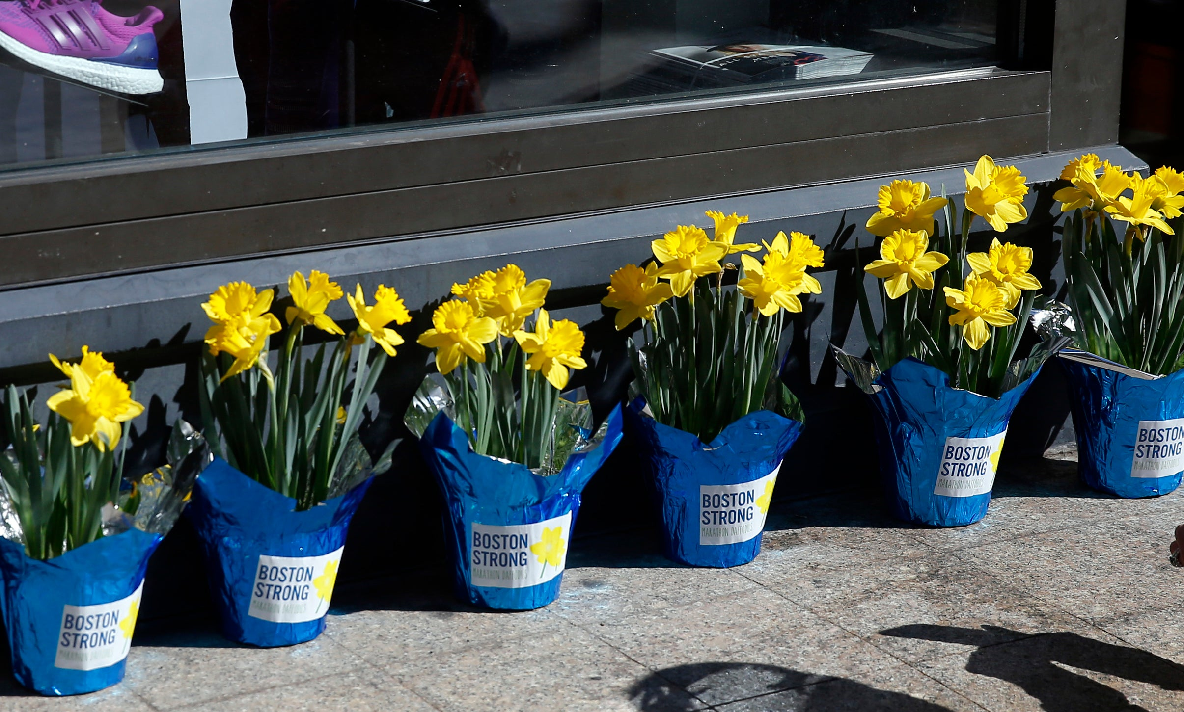 Boston, Massachusetts -- 4/19/2015-- A woman leans down to take a photo of potted daffodils with Boston Strong stickers on them lining the storefront window of Marathon Sports at the Marathon Finish Line in Boston, Massachusetts April 19, 2015. Jessica Rinaldi/Globe Staff Topic: Reporter: