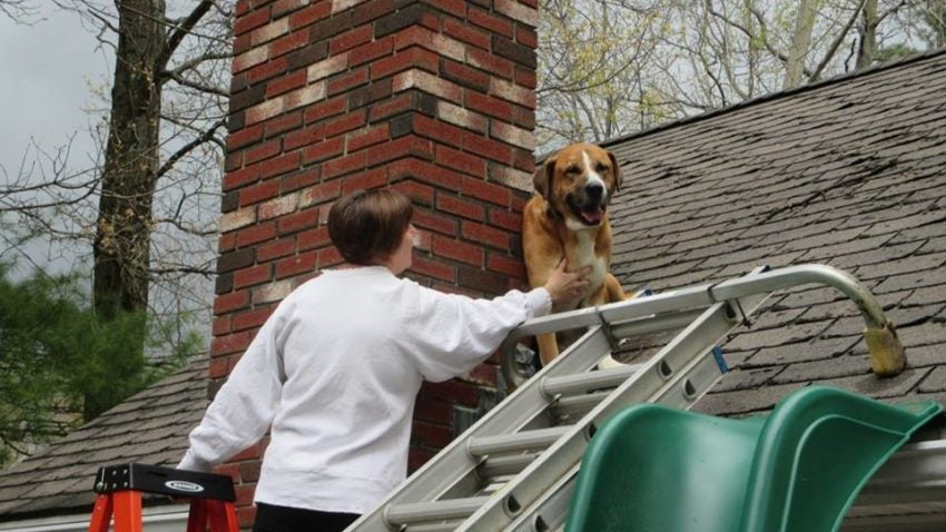 A Dog Named Murphy Got Stuck On A Roof In Charlton