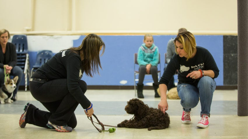 Coughlin said she most enjoys working with rescue dogs that have behavioral problems.