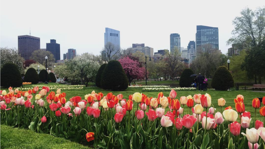 The spring flowers in the boston public garden are at their peak Boston public garden map
