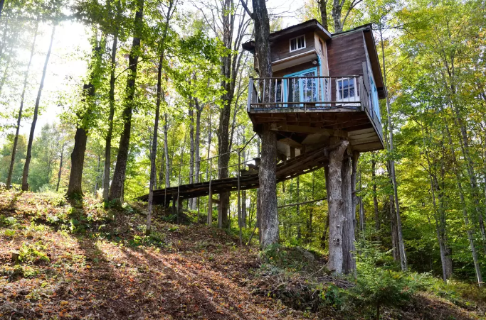 The Tiny Fern Forest Treehouse