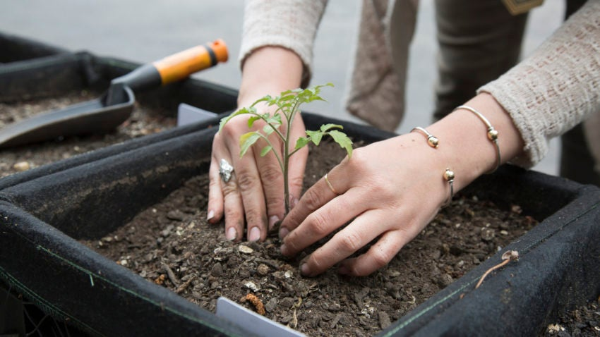 Sasaki Associates pays for all of the urban agriculture expenses and offers it as part of its employees' benefits.