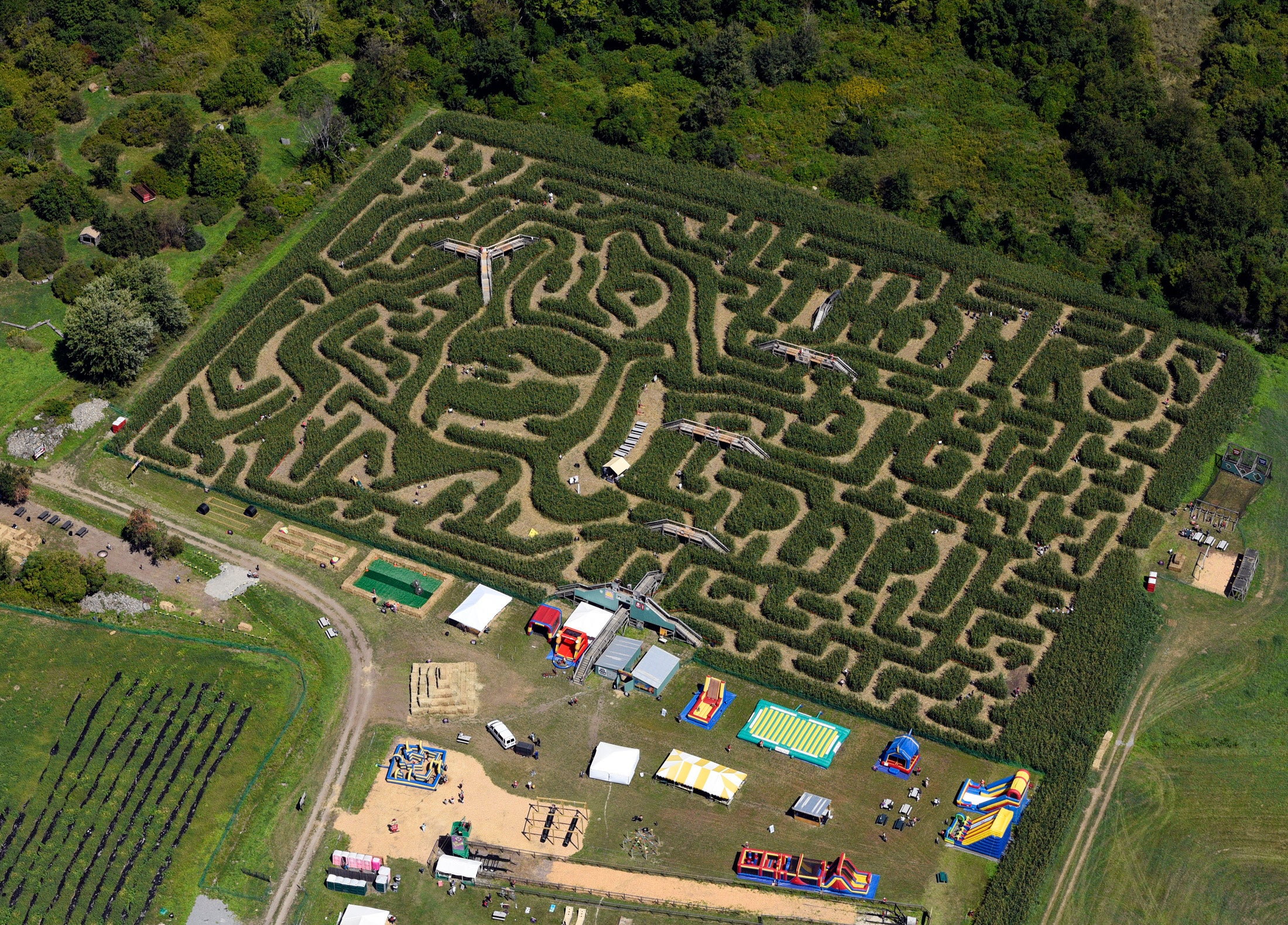 This aerial view shows a corn maze in the likeness of David Ortiz.