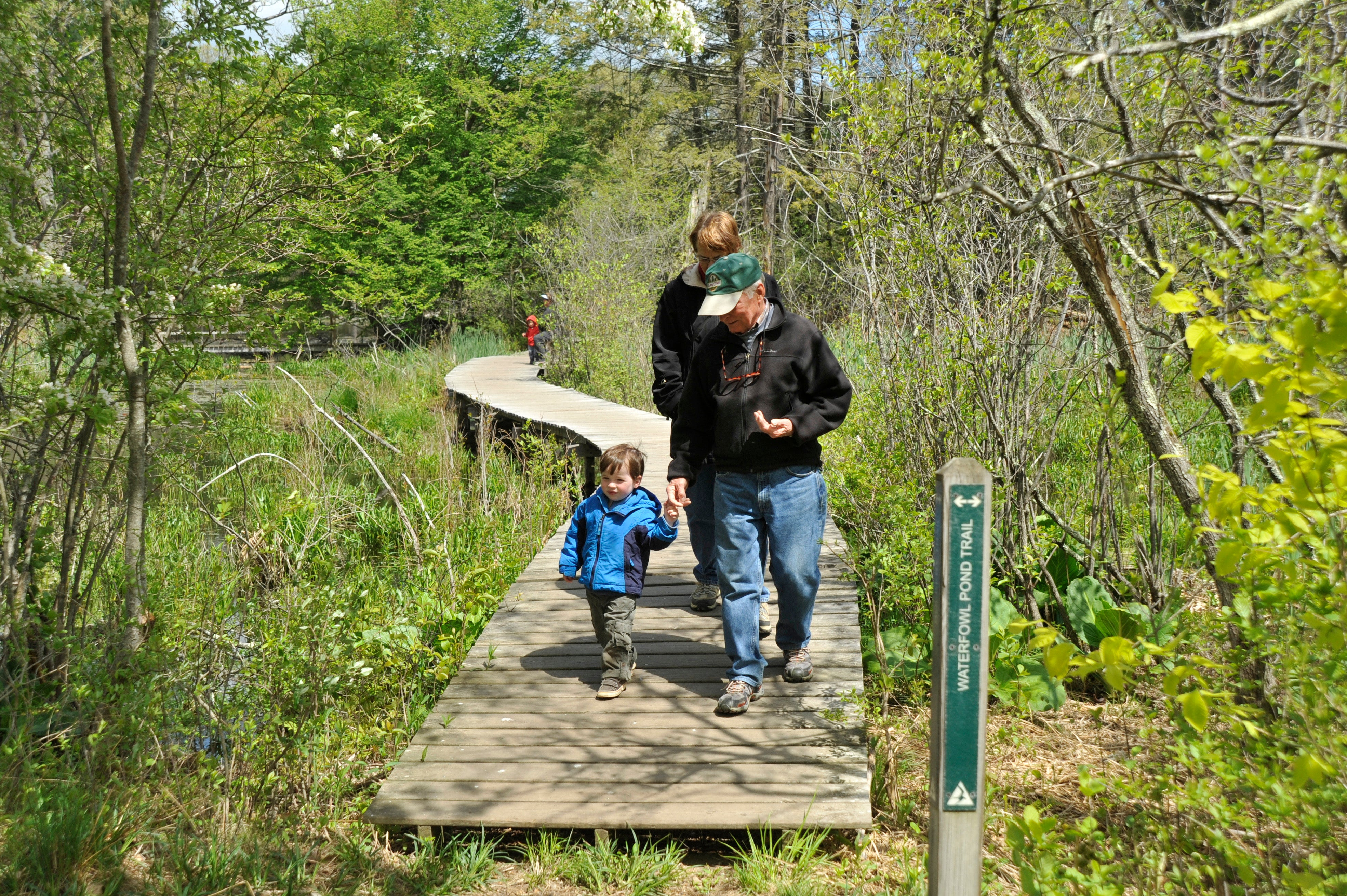 Liam Graham, 2, walks across a boardwalk with his grandparents Bill and Amy Graham at the Ipswich River Wildlife Sanctuary.