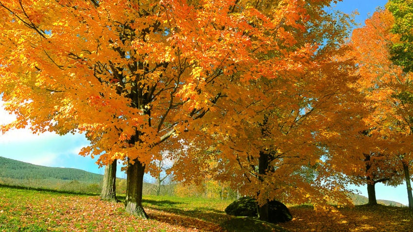 Go Patriots >> 42 places to see fall foliage in New England