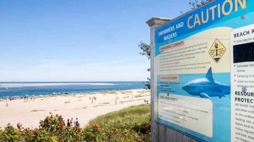 Nauset Beach Sees 2nd Shark Attack On Seal In About 2