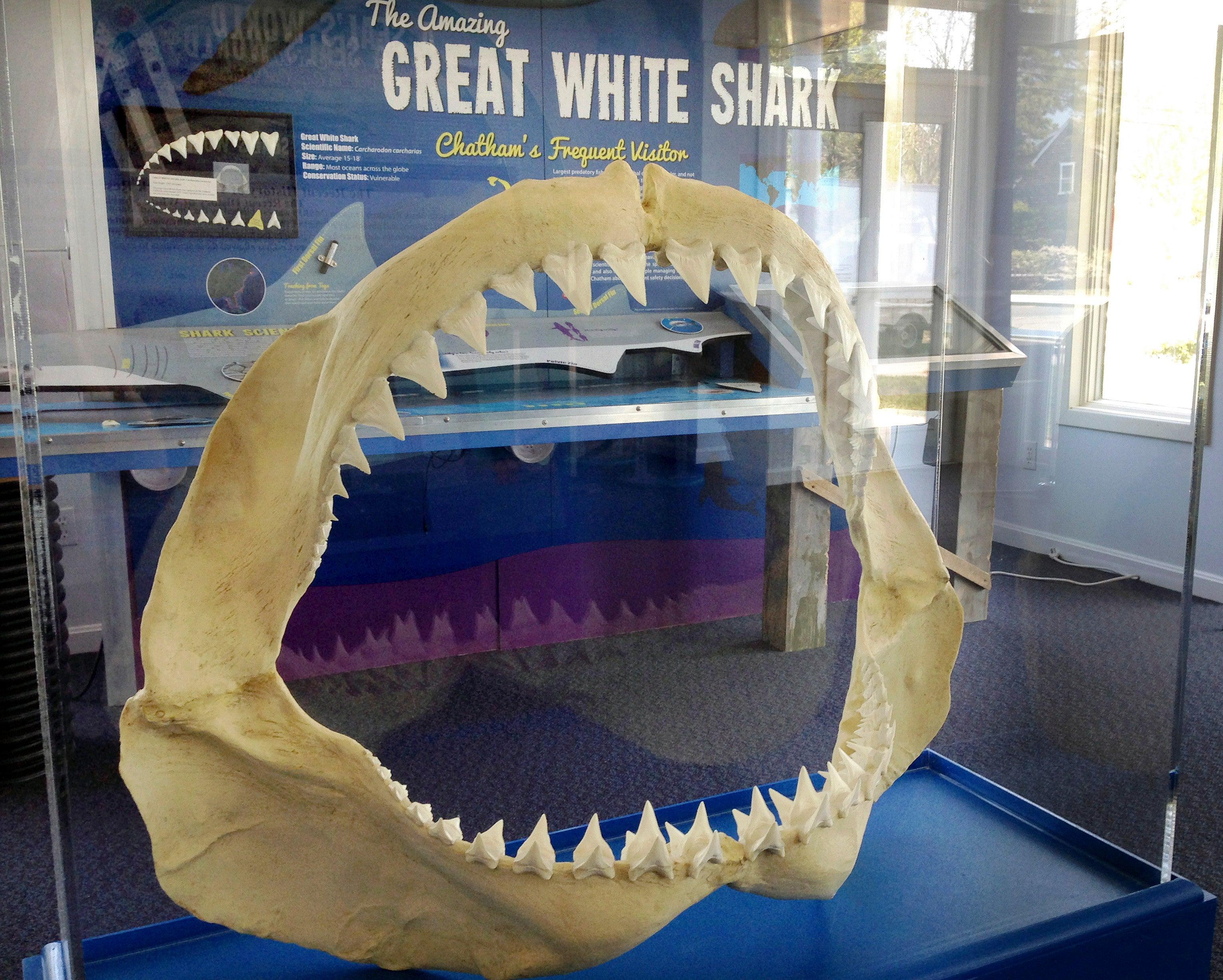 Chatham Shark Center
