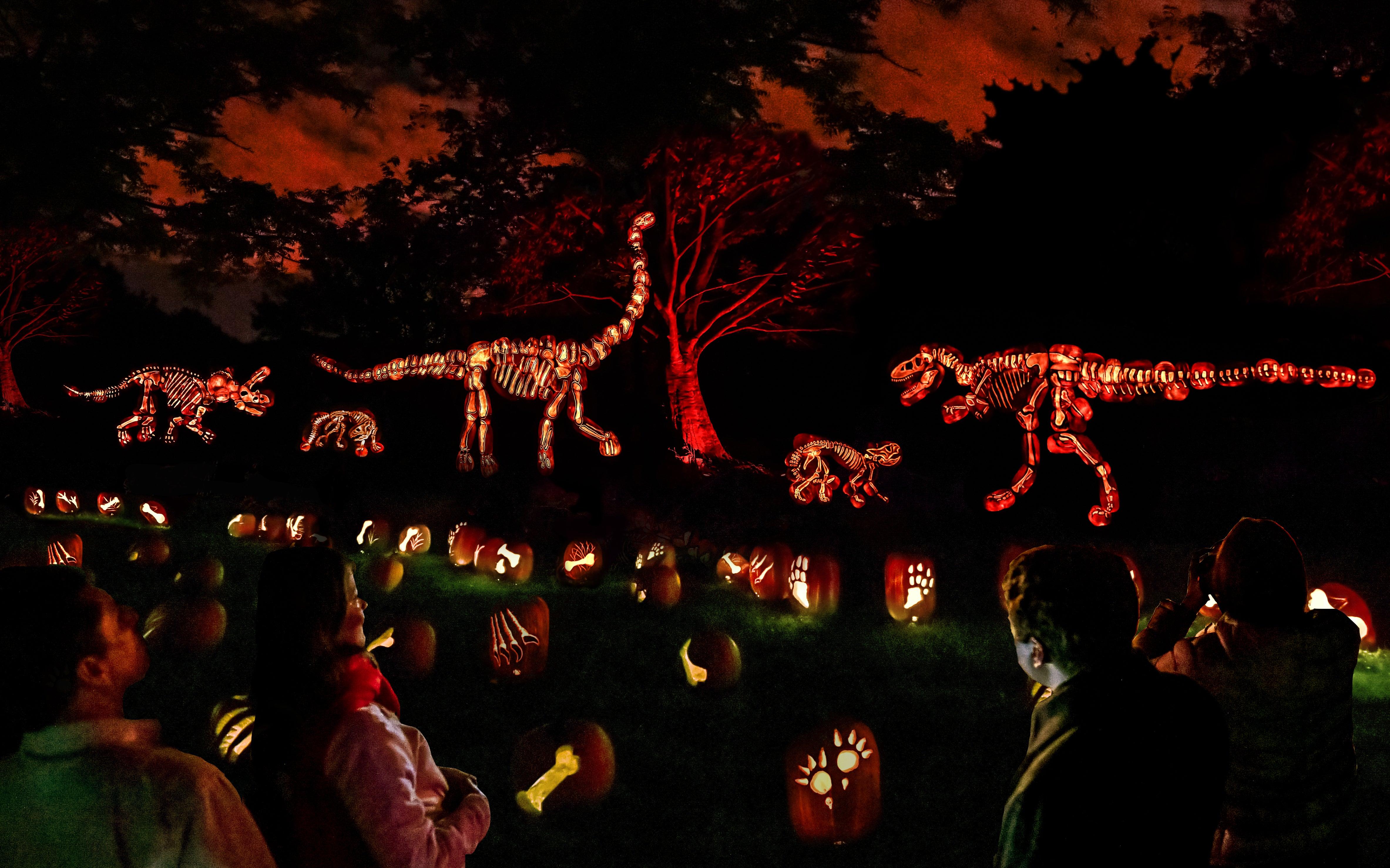 Halloween 2020 Franklin Park Ma At Franklin Park Zoo, see Jack O' Lantern Journey, thousands of